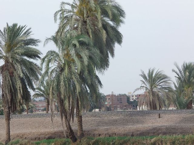 Assiut_Manflout_Road_طريق_أسيوط_منفلوط_-_panoramio.jpg Photo by the Hypatia Foundation.